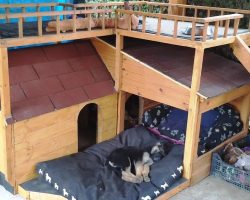 "Puppies Didn't Have A Place To sleep, So Mom Built Them A Doghouse ""Bungalow"""