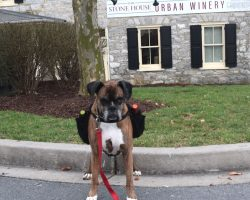 Good Dog Delivers Wine To Customers As Winery Practices Social Distancing