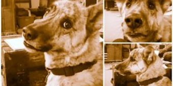 Some Argue That This Is 'The Best' Dog Video Ever Made