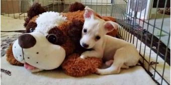 Breeder Threatens To Drown Disabled Puppy If No One Takes Him