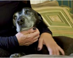 """Owner Said Dog's """"Old As Dirt"""" & Can Rot, Dog Sat Beside Woman And Begged To Live"""