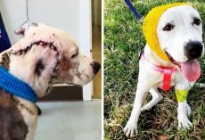 "Bait Dog Had Lost Entire Part Of Her Face, Vets Called It The ""Worst Case Ever"""