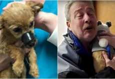 Anonymous Man Saves Battered Puppy, Finally Comes Forward To Collect His 'Reward'