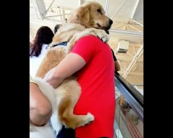 Dog Refuses To Accept He's A Big Boy & Demands Dad Carry Him On The Escalator