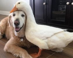 Dog & Duck Who Started Off On The Wrong Foot Somehow Become Inseparable Friends