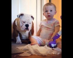 Loyal Dog Won't Snitch On Her Baby Sister Even When Mom Puts Her Under Pressure