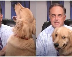 Hungry Golden Begs For Snacks & Sabotages His Weatherman Dad's Forecast