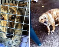 Woman Calls To Abandoned Dog Only To Find One Of His Body Parts Hanging Loosely