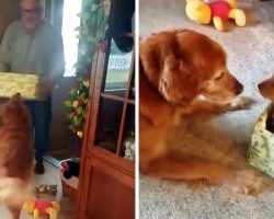 Dog Lost His Beloved Doggie Sister So Dad Decided To Cheer Him Up On Christmas