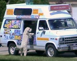 """Dog """"Loses It"""" When He Hears The Ice Cream Truck & Bolts Down The Street Alone"""