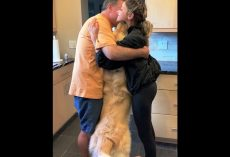Dog Overcome With Jealousy When People Hug Without Him So He Forces Himself In