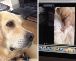 "Dog Sees Puppy Crying On Video & She Sobs As She Tries To ""Comfort"" The Puppy"