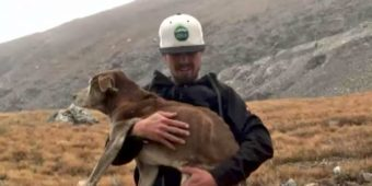 Dog Found On Mountain Reunited With Owners Thanks To Heroic Stranger