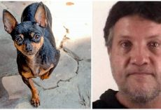 Man Punched & Choked His Mom's Miniature Pinscher, Then Threw Him Into Street