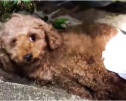 Pup In A Diaper Was Rotting In A Ditch, Man Picked Her Up & Choked