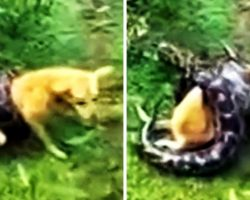 They Gulp In Fear As Python Starts Suffocating Dog, But Hero Dad Won't Sit Back