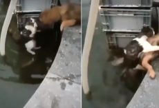 Cat Reaches For Help, Dog Jumps In Water To Save Her