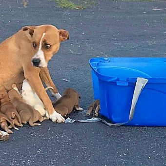 Dumped In A Parking Lot With Her 9 Babies, Mama Dog Did Her Best To Protect Them