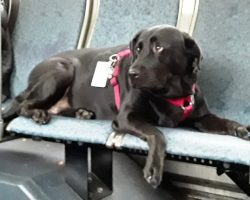 They Wondered Why The Dog Took The Bus All By Herself & Silently Sat On A Seat