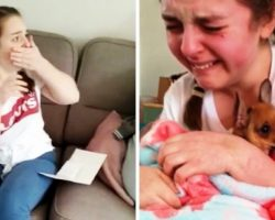 """""""Is He Really Mine?"""" – Sick Teen Bursts In Tears When She Gets Own Therapy Dog"""
