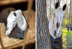 Horse's Life Falls Apart When He Turns Blind & They Said He Should Be Put Down