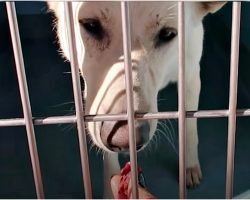 "Woman Reached Into Misunderstood Dog's Cage With A Snack & Onlookers ""Gulped"""