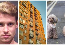 Man Nonchalantly Tosses His Two Dogs To Their Death From Fifth Floor Balcony