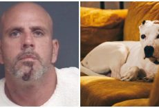 Man Knocks On Neighbor's Door So He Can Terrorize & Stab Their Dog