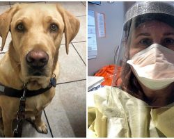 Nurse Goes To Great Lengths To Care For Man's Guide Dog While He Is In Hospital
