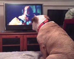 """Bulldog Wants To """"Save"""" The Little Girl In Horror Movie So She Must Take Action"""
