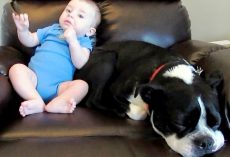 Mom Realizes Baby Is About To Release A Loud Fart, But She Doesn't Warn Her Dog