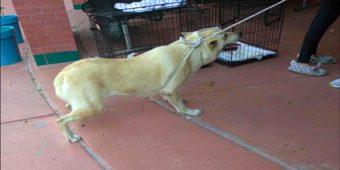 Family Drags Scared Dog To The Shelter With A Rope To Leave Her Behind For Good