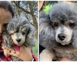 Woman's Senior Blind & Deaf Poodle Vanishes Moments After Going Outside