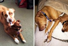 Shelter Separates Bonded Pair So They Can Get Adopted, But The Dogs Cry Non-Stop