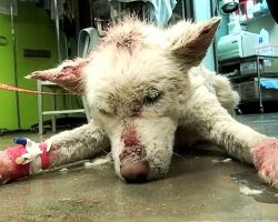 Homeless Husky Collapses After Living In Garbage Dump Outside City For Years