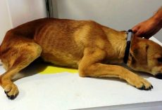 Abused Dog Was So Traumatized He Peed Himself When Rescuers Tried To Touch Him