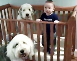 "Baby Was Supposed To Be ""Napping"" But Dad Busts His Fun Slumber Party With Dogs"