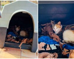 Pit Bull Proudly Stands Guard & Protects Pregnant Stray Cat As She Gives Birth