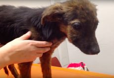 "Pup Was Brought To Be Euthanized For ""Not Playing,"" But Rescuers Quickly Intervened"
