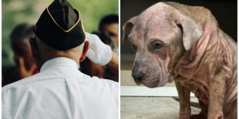 Military Veteran Donates His $1,200 Stimulus Check For Hard-To-Adopt Dogs