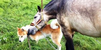 Stolen Horse & Depressed Dog Break Down As They See Each Other After 7 Months