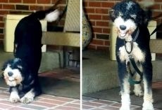 Dog Misses Mom & Waits For Her All Day, Flashes The Widest Smile When She's Back