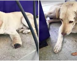 Woman Walked Up To Shattered Soul With Cut-Off Paw, Too Scared To Look Up