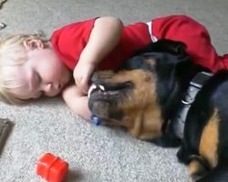 Baby Shoves His Fingers Inside Rottweiler's Mouth Before Mom Could Intervene