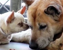 "Senior Dogs Get Dumped Together At High Kill Shelter Because They ""Got Too Old"""