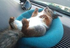 Soldier Saves Squirrel's Life, Now They're Driving Buddies