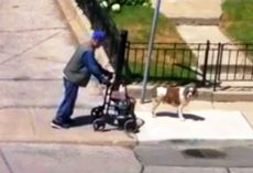 Dog Doesn't Care About His Own Fun, Patiently Looks Out For Sick Elderly Owner