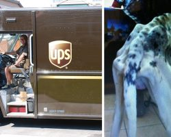 UPS Driver Finds A Bony Great Dane While Out On His Route
