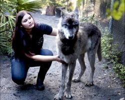 """Owner Dumped Giant """"Dog"""" Coz He Grew Too Large & He Was Put Up To Be Euthanized"""