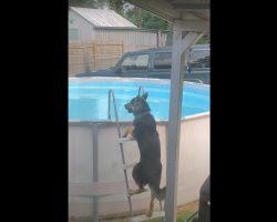 Smart Doggo Climbs Into Pool And Enjoys A Swim Like A Happy Child